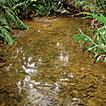 Fish habitat associations along a longitudinal ...
